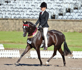 """Champion Open Pony Newcomer """"Royalwood Enchanting"""" and Margot Haynes pictured on their victory lap after being sashed Runner Up to the Grand Champion Open Newcomer."""
