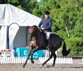 """Melissa Plucknett's exhibit """"Octanee"""" (ATSB Octillion) ridden by Paul Austin, pictured working out in the News Stars Thoroughbred Classic event."""
