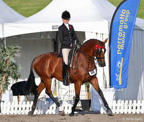 """Susan Gorst's """"Suits"""" (ATSB Sir Walter Scott [IRE]) was ridden by Ali Berwick in the Champion New Stars Thoroughbred Classic class."""