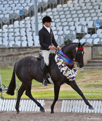 """Winner of the Champion New Stars Thoroughbred Classic class was Sue Thompson's """"Givenchy"""" (ATSB Data Point), ridden by Greg Mickan."""
