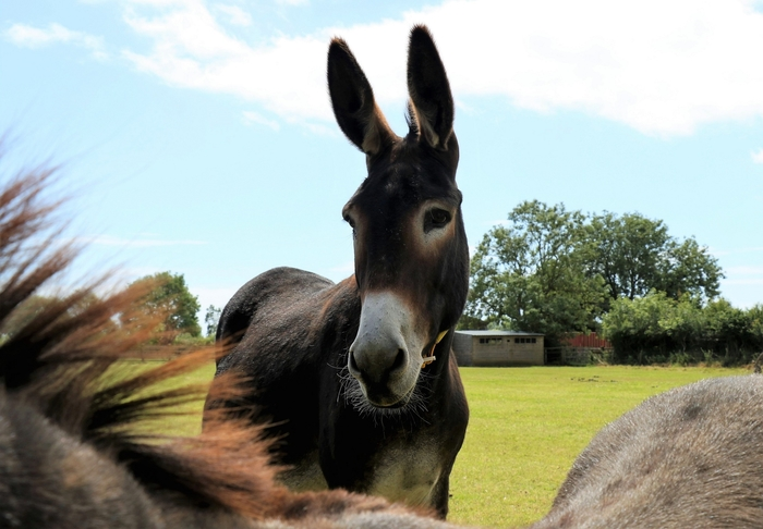 The Donkey Sanctuary Sidmouth SFYS