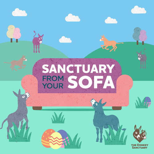 Sanctuary From Your Sofa - The Donkey Sanctuary