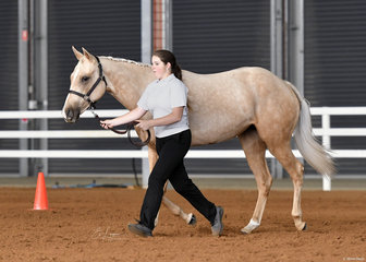 CL Delightful Kisses and Kate Mawson showing in Led Versatility Yearling Hunter In Hand.
