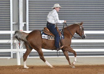 Kevin Gorrie and Amoretto in the Open Ranch Riding.