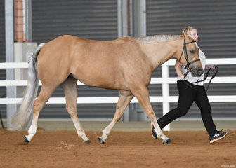 KLI Shes My Priority with Kristen Mannie in the Junior Horse Hunter In Hand.