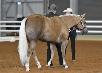 Morganlee Disco Hotti, shown by Dylan Hughes for Vicki White.