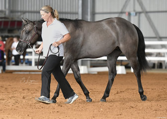 Tracey Mallia and Skyeblu Groovin Phoenix in the Led Versatility Hunter In Hand.