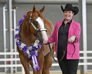 Winner of the 2 and 3 Year Old Futurity, Tania Hilder with LA Sherlock Holmes.