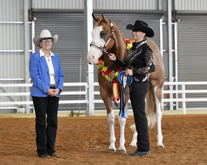 Winner of the Open Halter Futurity, Randalwood Bar Dun It shown by Kathy Randall