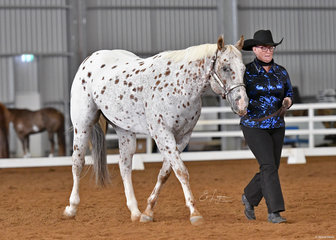 Carol Schwartz and JNH Totally Sweet in the Amateur Showmanship.