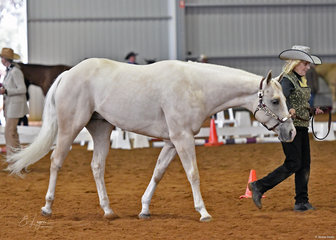 Frances Elliott showing FMM Spectacular Image in the Appaloosa Colt 2 & 3 years halter class.