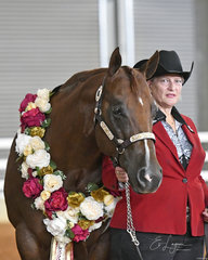Helen Barnes with BM Intentional, Supreme Quarter Horse at Halter.