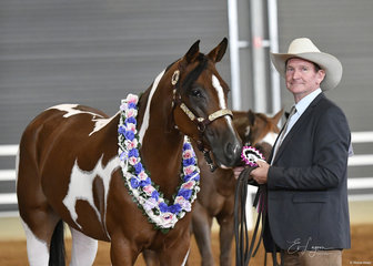 Kevin Gorrie with Good Thinkin Ninty Nine, winner of the 3 years and Over Led Versatility Lunge Line class.
