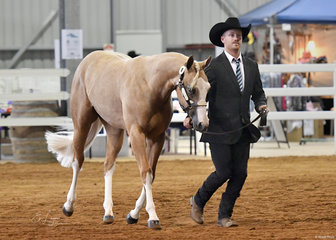 RR Midnight Delight in the Yearling Halter Futurity with Ryan Robinson.