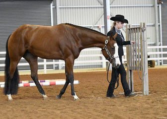 Shez Top Shelf Shiraz shown by Mikayla Gaunt for Jeanette Buttterfield  in the 2 year Old Led Trail