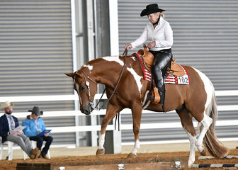 Whata Zipper Snipper and Debra Cameron in the Senior Horse Trail.