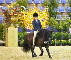 """Working out for a Top 10 placing in the DOUGLAS FAMILY QLD Child's Ridden APSB Shetland Pony event is """"Woodview Poet"""", ridden by Harrison Manning and ownd by Paula Clarke-Smith."""