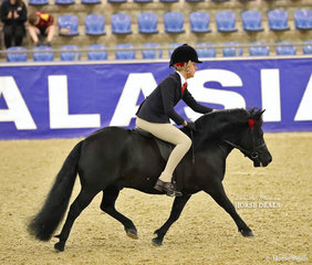 """Third Placegetter in the DOUGLAS FAMILY QLD Child's Ridden APSB Shetland Pony event was """"Dunavon James The First"""". Owned by Emma Pickstock and ridden by Lillie Foord."""