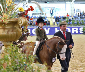 """The Wells Family's """"Bellingara Tribute"""" was ridden by Isobel Murphy in the RPSBS NSW Show Hunter Leading Rein event."""