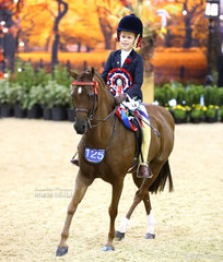 """The WESTGROVE RACING Reserve Champion Rider 6 & under 9 years Evie Magnier, riding """"Cimeron Prince Charming""""."""