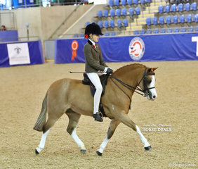 "Rebecca Shute's ""Breemour Park Hot Gossip"" pictured working out in the MP GLOSS PRODUCTS Child's Small Show Hunter Pony event."
