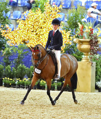 "Felicity Radley's ""Lyndhurst China Doll"" was ridden by Jackson Radley in the LANGTREE STUD Child's Large Saddle Pony event."