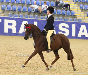 """""""Peter Pan Of Kingston"""" exhibited by Rebecca Shute working out for a Top 5 placing in the ROBBANIE STABLES Small Saddle Pony event."""