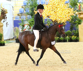 """Entering the arena for their individual workout in the ROBBANIE STABLES Large Saddle Pony event is """"Sandarah Evening Star"""" exhibited by Willow Scotson and ridden by Riley Kent."""