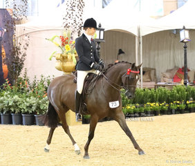 """Elsie Cooper's exhibit """"Kolbeach Holly's Flawless"""" was ridden by Alanna Richards in the CBC CONSTUCTIONS Small Galloway event."""