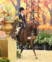 """Tanya Plucknett's """"Argyl Starfire"""" entering the arena in the CBC CONSTRUCTIONS Small Saddle Galloway event."""
