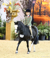 """Vanessa Galloway-Smith's exhibit """"Bamborough Snigger"""" ridden by Harrison Galloway-Smith in the CBC CONSTRUCTIONS Small Show Hunter Pony event."""