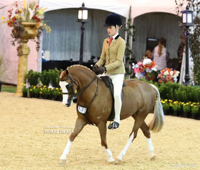 """Top 10 placegetter in the CBC CONSTRUCTIONS Small Show hunter Pony event """"Asharley Play On Words"""" owned by Indy Gardiner and ridden by Elizabeth Taylor."""