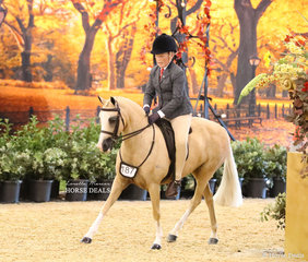 """Kim Humphreys' """"Karlana Spring Chatter"""" entering the arena for the CBC CONSTRUCTIONS Small Show Hunter Pony class."""
