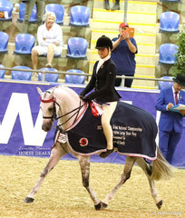 """""""Mirinda Alabaster"""" ridden by Daizi Plumb for owner Christine Nichols was the McDOWALL FAMILY Reserve Champion Large Saddle Pony."""