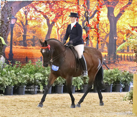 """Entering the arena for their individual workout in the GIDDY UP GIRL Rider 17 & under 21 years event Amelia Sadler, riding """"Tarintino""""."""