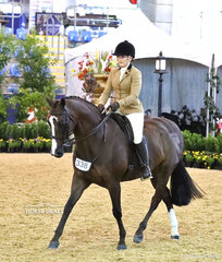 """Winner of the Owner Rider Award and placing Top 10 was Kelly Ralph and her """"KL Embers"""" in the PAUL AUSTIN EQUITATION Large Show Hunter Galloway eent."""