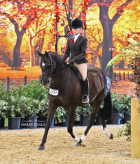 """Emma Richardson's exhibit """"Dreamtime Ambition"""" ridden by Trinette Crawford was the PAUL AUSTIN Grand National Champion Large Show Hunter Galloway."""