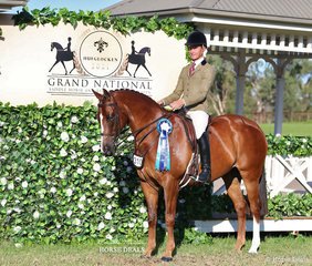 """Bronwyn Parker's """"Midway Resistance"""" was ridden by Tyler Kelly, the placed 3rd in the PAUL AUSTIN EQUITATION Large Show Hunter Galloway event."""