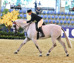 """Finishing their workout in the EURORIDER AUSTRALIA Rider 21 & under 30 years event is Lyndsey Blanch riding """"Dicavalli Royal Gustav""""."""