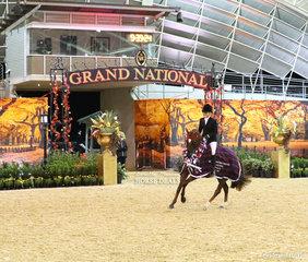 "The KYROS FAMILY Grand National Champion Large Saddle Galloway Orleans Graetz's ""Argyl Fine Art"" ridden by Margot Haynes."