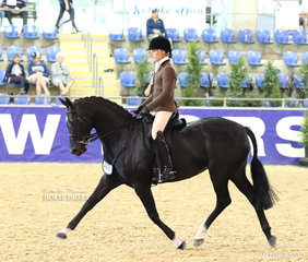 """Adam Oliver riding the Universal Stables and Emma Ashton's entry """"Jazdan Royal Olympia"""" placing Top 10 in THE WALFAM INVESTMENTS Small Show Hunter Hack event"""