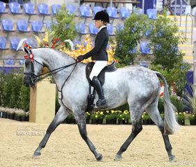 """Melissa Oven's """"Laser Envy"""" in the ROMSEY PARK Large Saddle Horse event."""