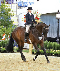"""Working out in the ROMSEY PARK Large Saddle Horse event """"DP Amazing"""" exhibited by Michelle Paynter."""