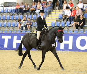 """Alana Richards riding her entry """"Soloman"""" in the ROMSEY PARK Large Saddle Horse event."""