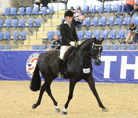 """Riley Kent and """"KT Rolls Royce"""" competing in the ROMSEY PARK Large Saddle Horse event."""