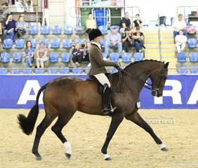 """""""Federer"""" exhibited by Universal Stables and Kate Kyros placed Top 5 in the SYDNEY SOLVENTS Large Show Hunter Hack event."""