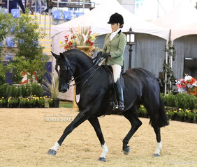 """""""Reuben Star""""  was the SYDNEY SOLVENTS Reserve Champion Large Show Hunter Hack, exhibited by Melissa Waller."""