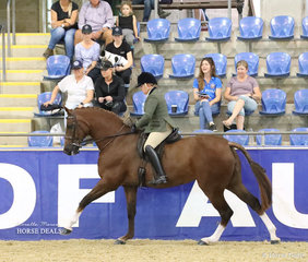 """Working out in the SYDNEY SOLVENTS Large Show Hunter Horse event """"Bella Rossa"""" and Rachel Wessel."""