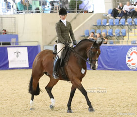"""""""Havenleigh Park Furst Knight"""" exhibited by Donna White working out in the SYDNEY SOLVENTS Large Show Hunter Hack event."""