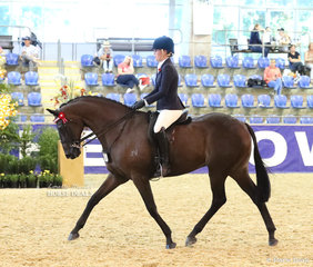 """""""Octane"""" exhibited by Paul Austin completes the workout for the """"M.R. BREECHES"""" Small Saddle Horse event."""